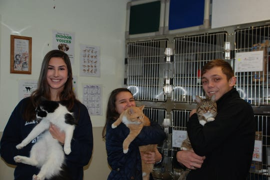 RVCC service learning students, from left, Camryn Fedeli of Ringoes, Maria Kish of Annandale, and Colin Simony of Lebanon assist with cats as volunteers at the Somerset Regional Animal Shelter.
