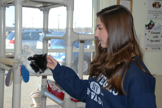 ]: RVCC service learning student Camryn Fedeli of Ringoes plays with a cat as she volunteers at the Somerset Regional Animal Shelter.