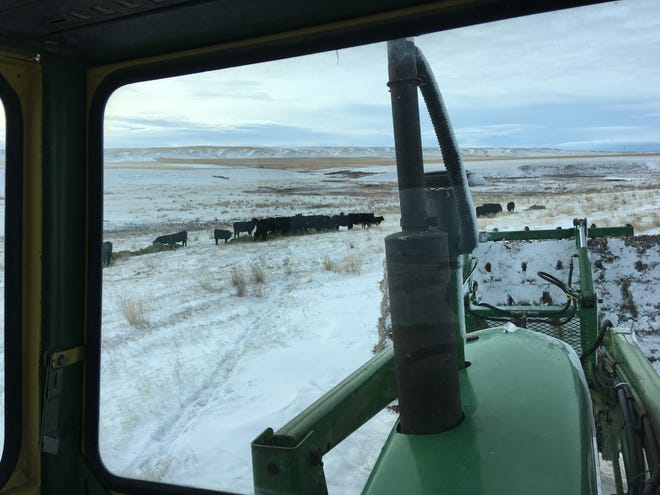 The view from Lisa Schmidt's tractor is different this winter now that she sits inside a cab. She has plenty of time to think while feeding her cattle and sheep inside a warm, dry tractor.