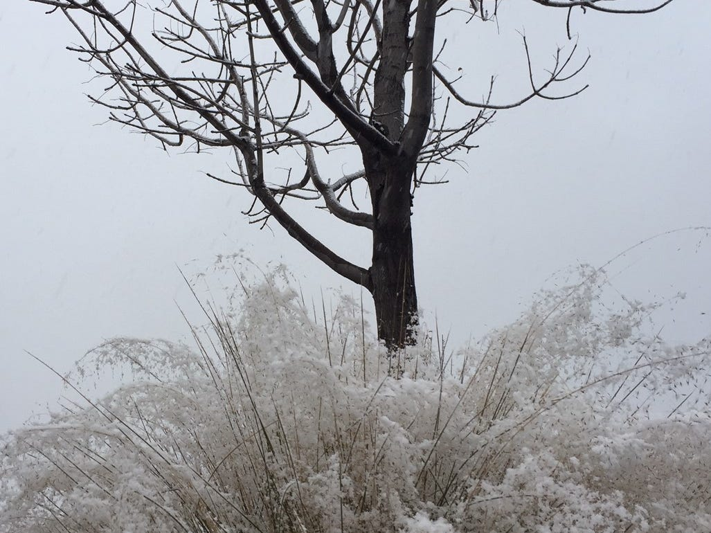About an inch of snow was predicted for Las Cruces on Wednesday, Jan. 2, 2018.