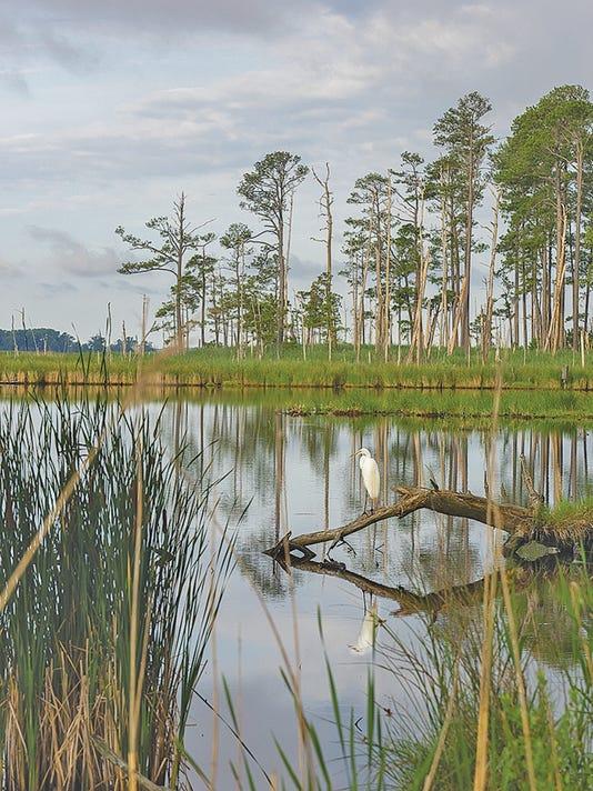 Chesapeake Watershed