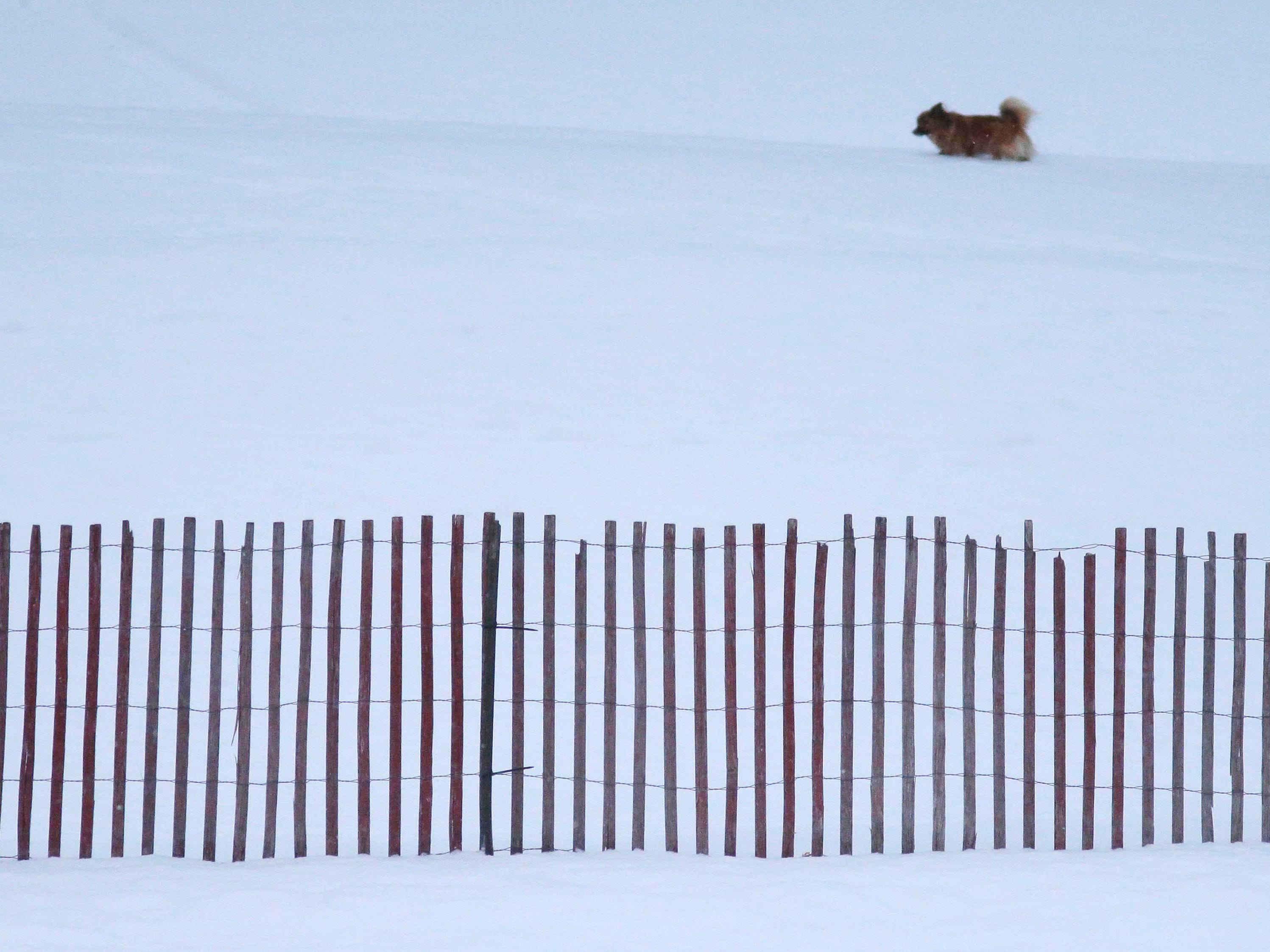 A small dog scampers in the snow near a snow fence at Kiwanis Park, Wednesday, January 2, 2019, in Sheboygan, Wis.