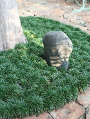 Dwarf mondo grass ringing a tree.