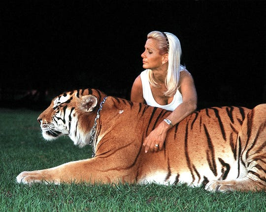 "Gloria Johnson with a yellow Siberian Tiger named ""TJ"" at Robert Baudy's Savage Kingdom farm in central Florida where he breeds exotic cats and Johnson trains them to be tame and to be able to be walked by humans.  She does not train them to do tricks and acts that are not natural."