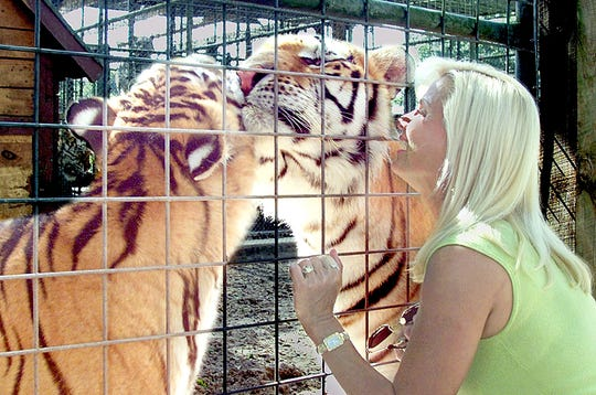 Upon arriving at Savage Kingdom the first thing Gloria Johnson does is rush to greet Nadia (L) and TJ, two golden Siberian tigers while they rub faces inside their cage to her happy greeting.