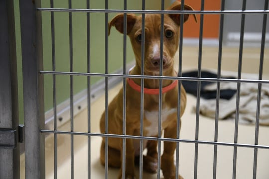 Valley Oak SPCA shelters and adopts on average than 100 animals per month.