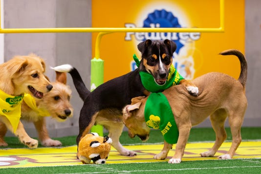 Puppy Bowl Xv