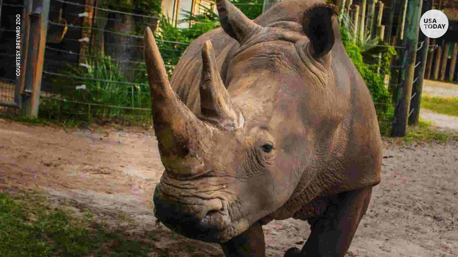 Toddler stumbles into rhino enclosure at Florida zoo