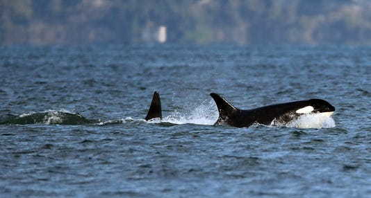 Resident Orcas File 02