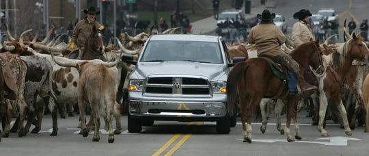 Chrysler introduced the new Dodge Ram in the middle of a cattle drive on the streets of Detroit, Sunday, January 13, 2008 at the North American International Auto Show.