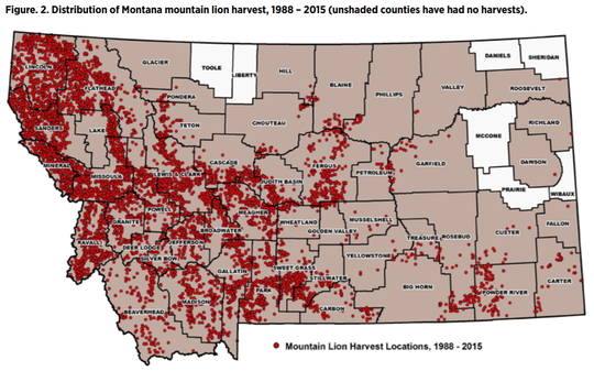 Lions have been sighted or harvested in most of the Montana's 56 counties.