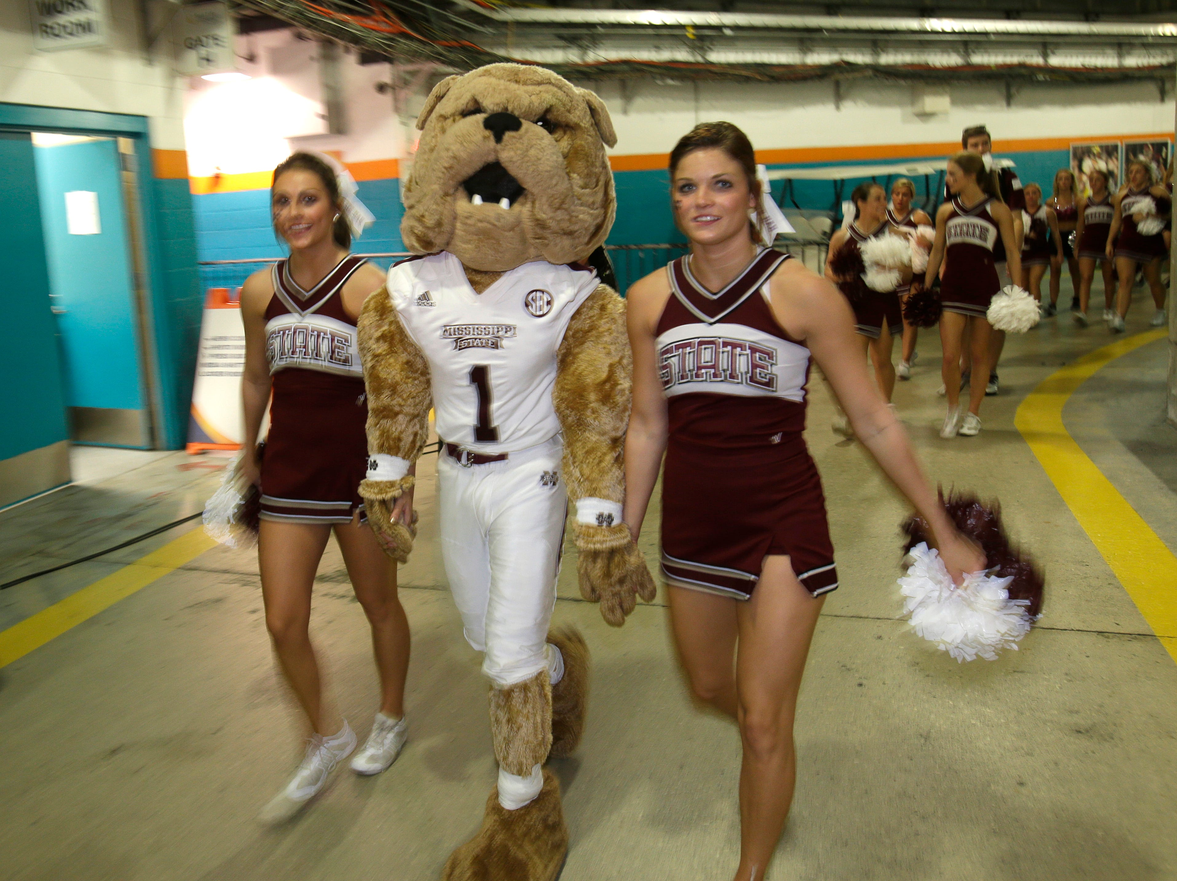 "Mississippi State mascot ""Bully"" walks with cheerleaders before the start of the Orange Bowl NCAA College football game between Georgia Tech and Mississippi State, Wednesday, Dec. 31, 2014 in Miami Gardens, Fla. (AP Photo/Wilfredo Lee)"