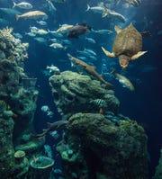 At the South Carolina Aquarium, connect with more than 5,000 animals.