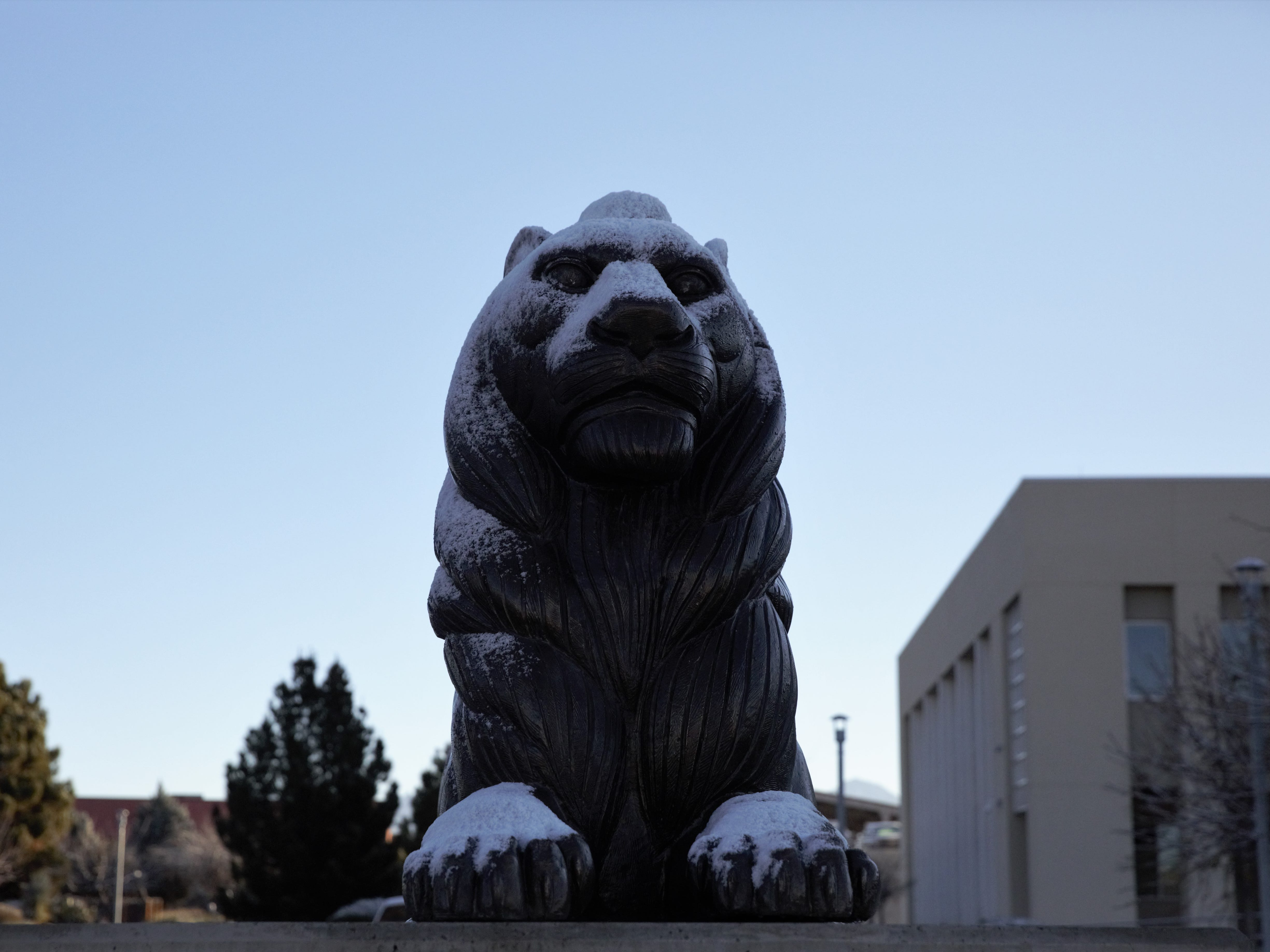 One of two lions near the entrance to Las Cruces City Hall's parking lot sits dusted with snow the morning of Thursday, Jan. 3, 2019.