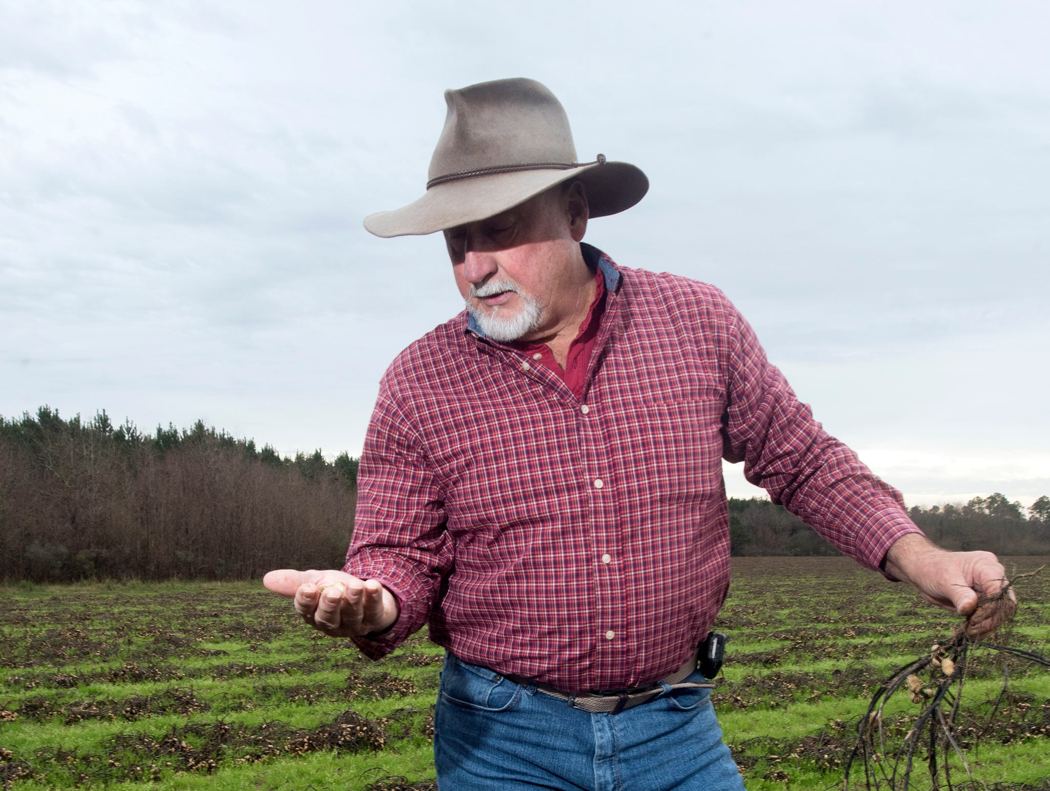 Atmore area farmer, Rodney Helton, inspects what is his peanut crop in a rain-soaked field on Thursday, Jan. 3, 2019. Helton, like many area farmers, is facing significant loses after record rainfall total this harvesting season.