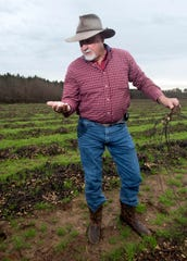 Farmer Rodney Helton stands in his rain-soaked peanut field, which he says will just wind up being next year's fertilizer.