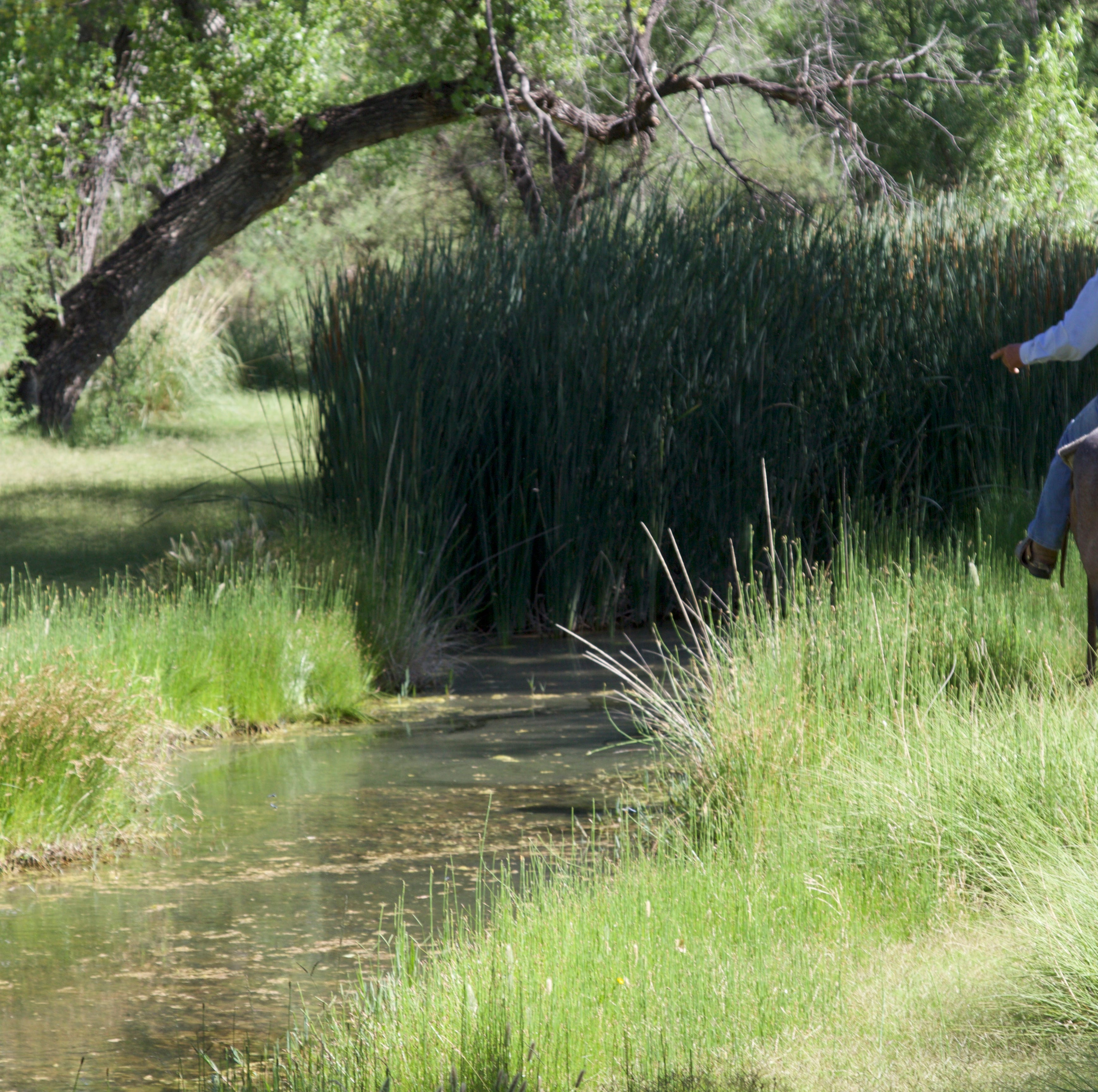 A rancher and an ecologist hike the desert, hunting for water and common ground on the San Pedro River