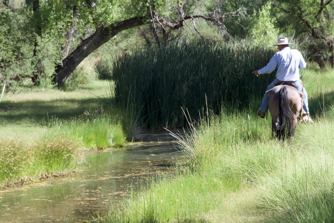Mike Hayhurst rides his horse within a riparian area along the Babocomari River on June 23, 2018.