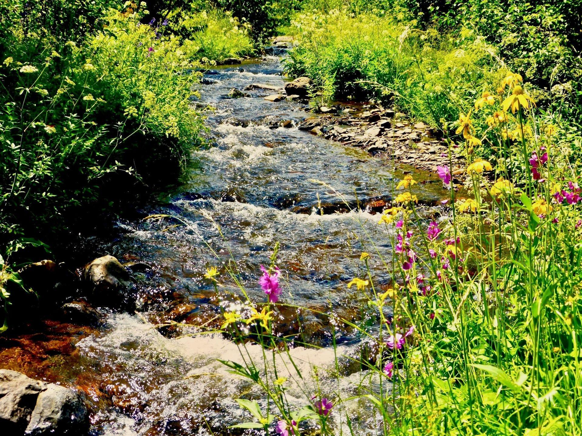 El río Little Colorado es un lugar popular para la pesca, ya que fluye a través del corazón de Greer.