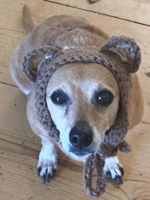 "Sofia Jordan's 12-year-old dog ""Bailey"" sits wearing a headband she made for him."