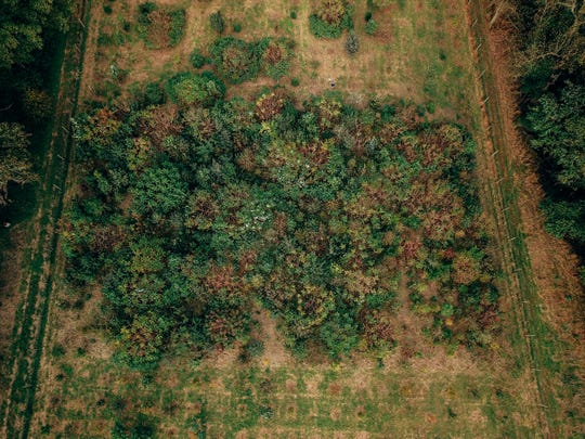 The first reforestation test plot, planted in 2015, shows some early results. This plot, planted densely with a mix of shrubs and trees, has grown faster than the others, possibly from competition.
