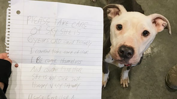 """A terrier mix named Sky was abandoned with a note at the Delaware Humane Association in Wilmington on Jan. 2, 2019. """"Please take care of Sky,"""" the note says. """"She 6 years old and friendly. I couldn't take care of her. I become homeless and couldn't feed her. She is not sick, just hungry, very friendly. Please find her a home. Please."""""""