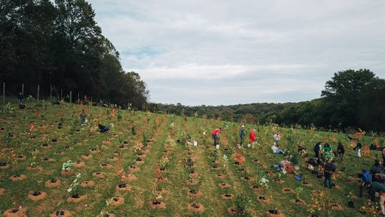 More than 150 volunteers planted 2,700 trees and shrubs over a single week. Mt. Cuba Center staff dug holes for the trees in a tight grid, making planting quick and simple.