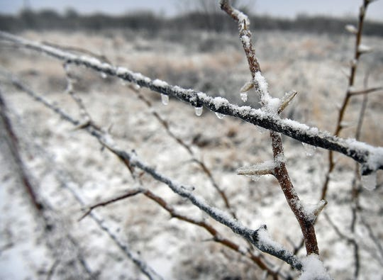 Barbed wire and mesquite thorns are dulled by a layer of ice and snow Thursday morning.