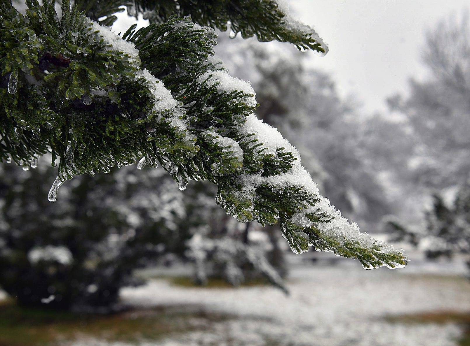 A mix of ice and snow overnight weighed down trees in North Texas.