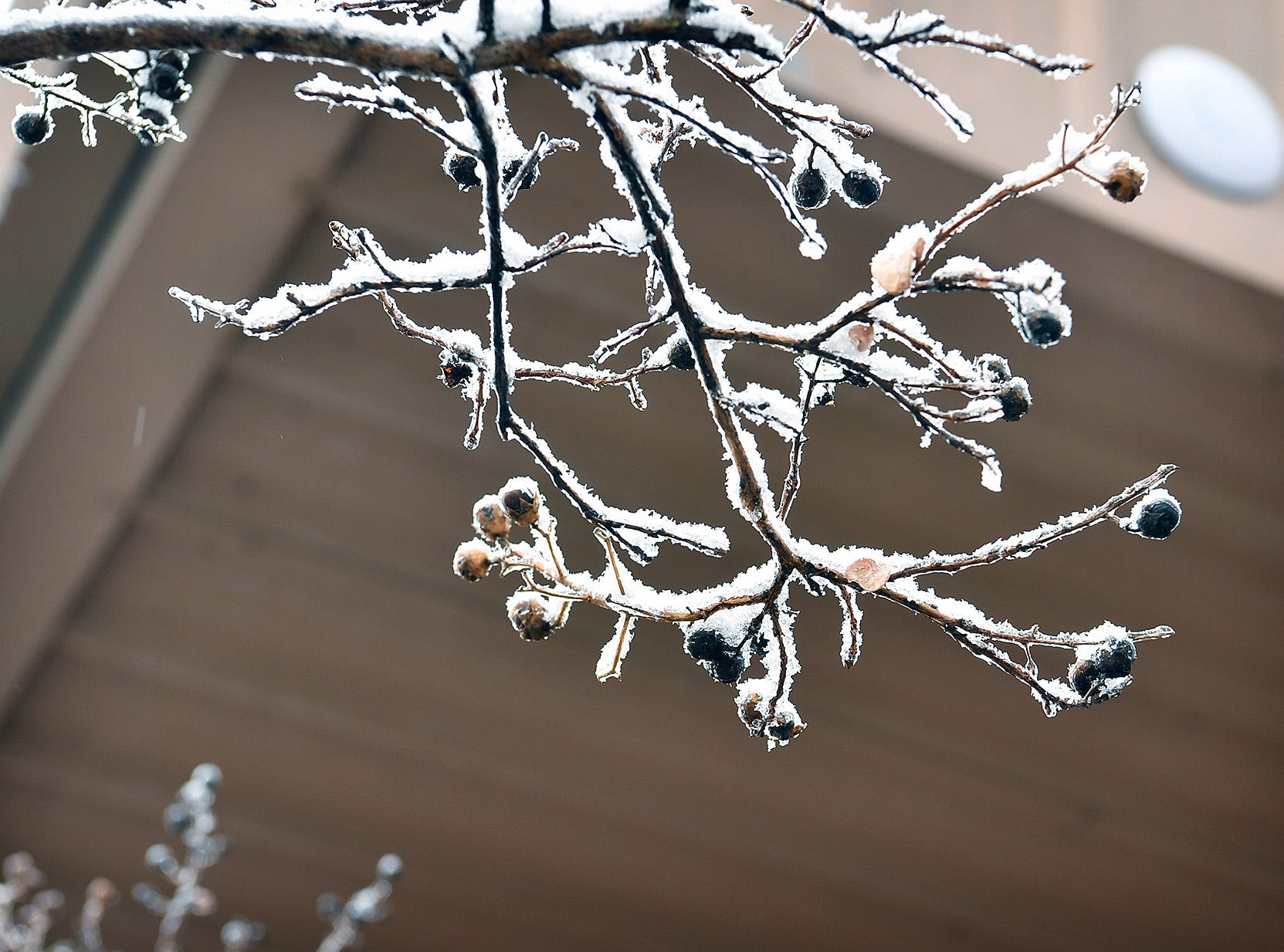 Fluffy snowfall decorated trees and shrubs around Wichita Falls Thursday.