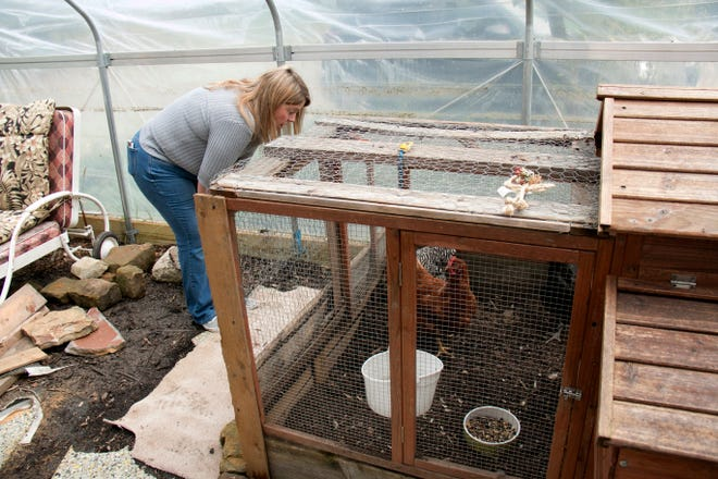 In this undated photo Debbie Sisson looks at the chickens they have on the Woodrow Project recovery house and farm in North Royalton, Ohio. The North Royalton recovery house and farm started in February as a way to provide stability and training to women in recovery, Woodrow Project executive director Erin Helms said.