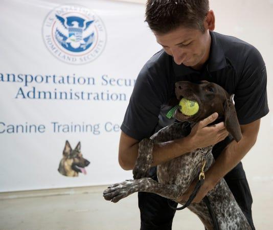 Xxx Tsa S Canine Training 019 Jpg Tx