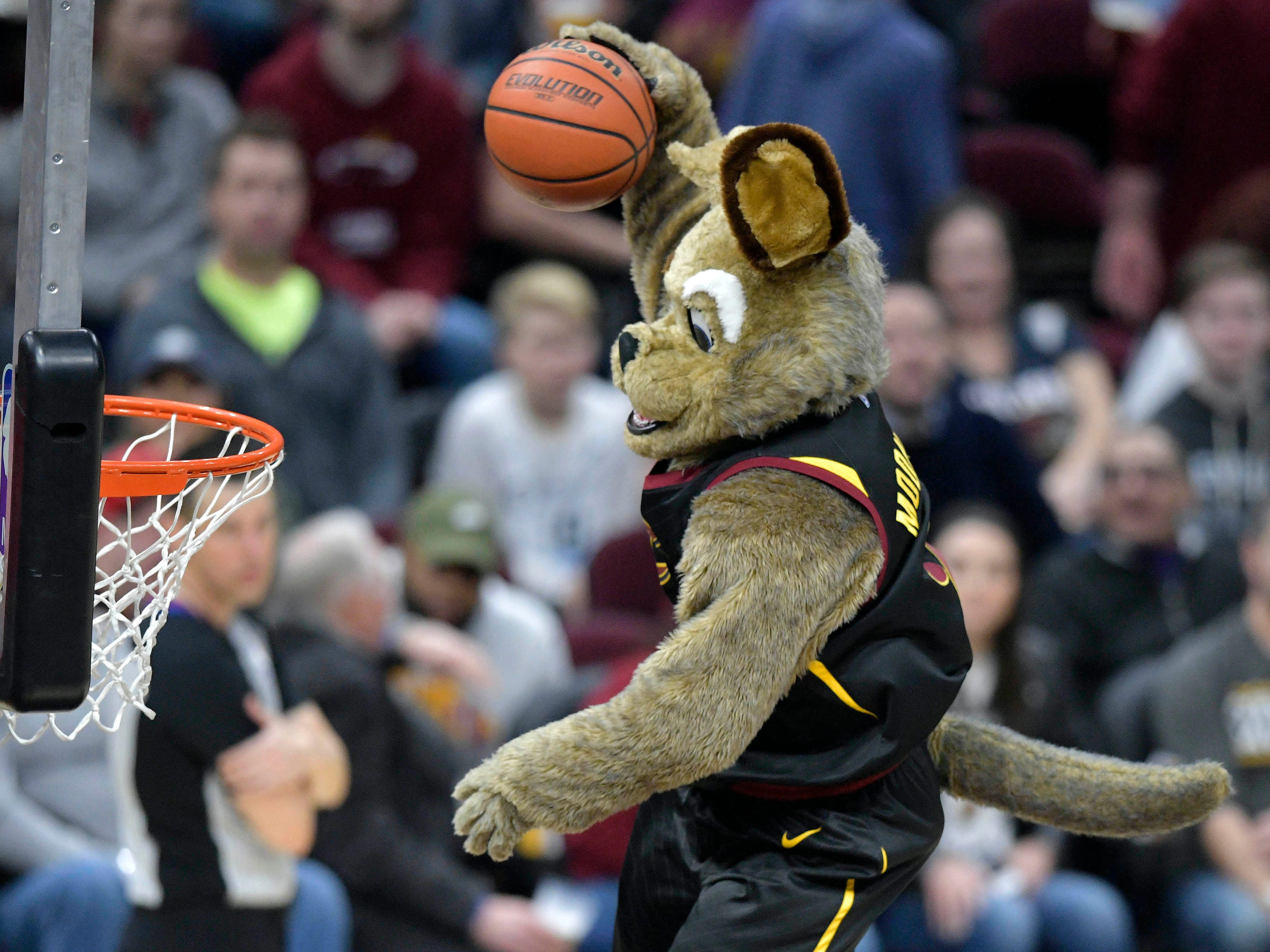 Jan.Cavaliers mascot Moondog entertains the crowd with an acrobatic dunk.