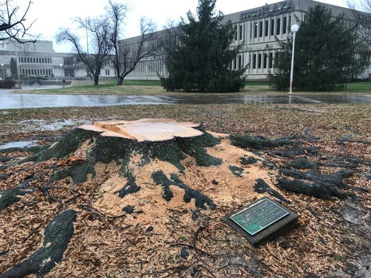 Evansville's Bicentennial Tree not cut down by mistake