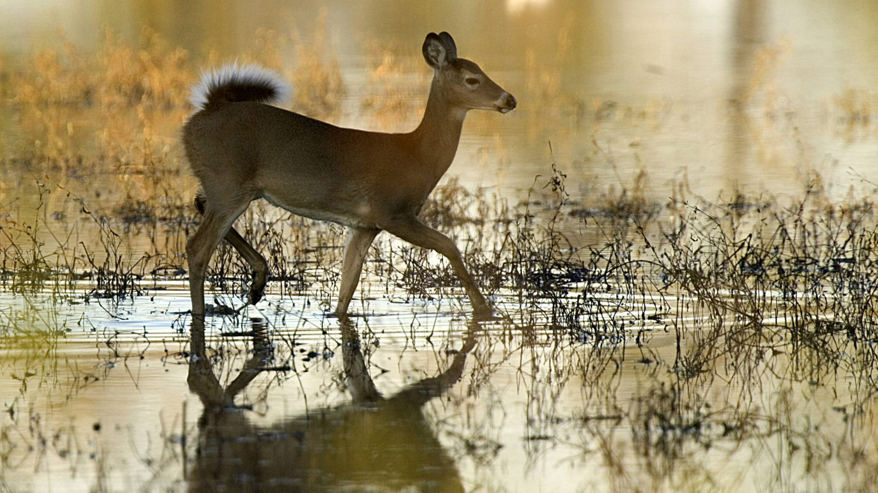 Flooding and deer hunting in Mississippi