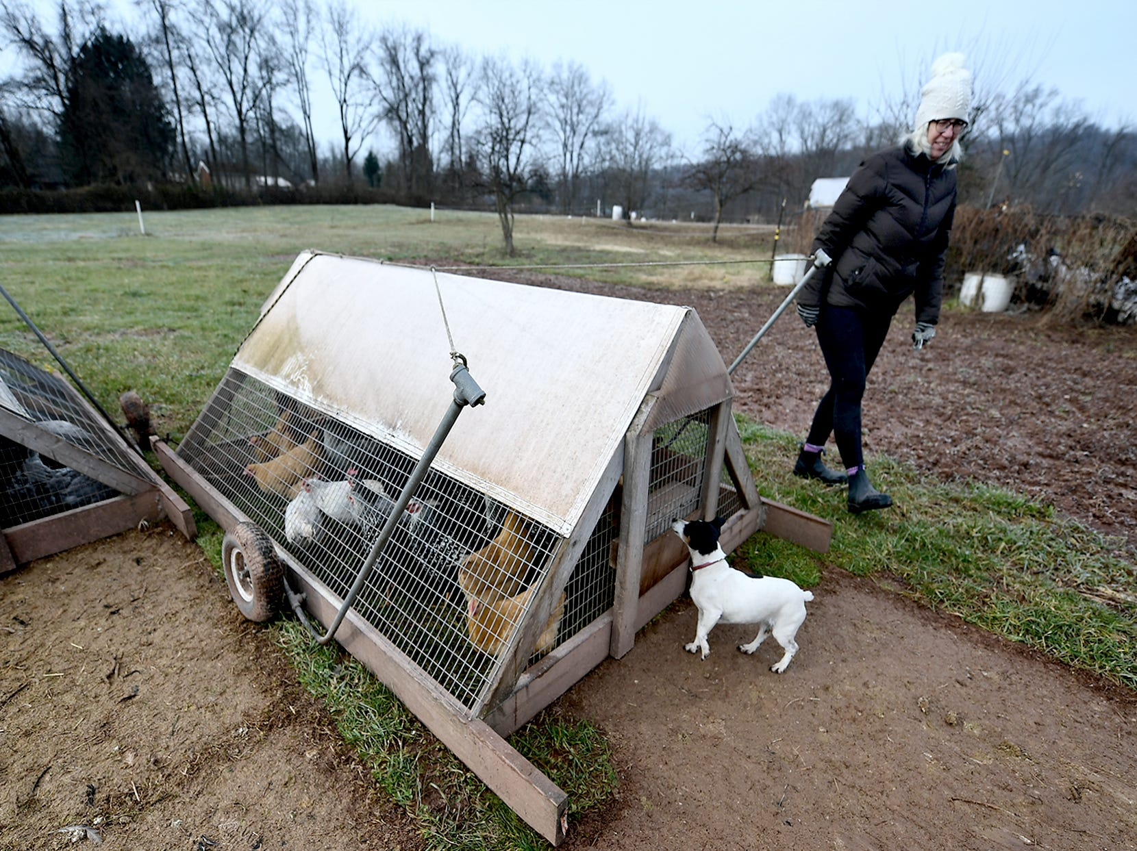 Dru Peters checks on portable chicken pens at his family's sustainable Sunnyside Farm in Newberry Township Friday, Jan. 4, 2019. Bill Kalina photo