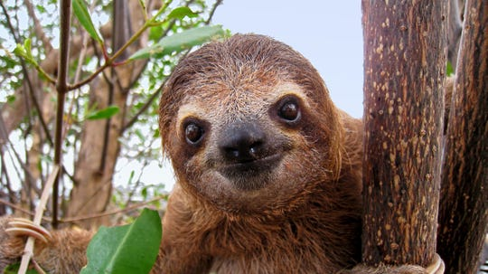 Meet a sloth Saturday and Sunday, Jan. 12 and 13, at the Main Street Armory.