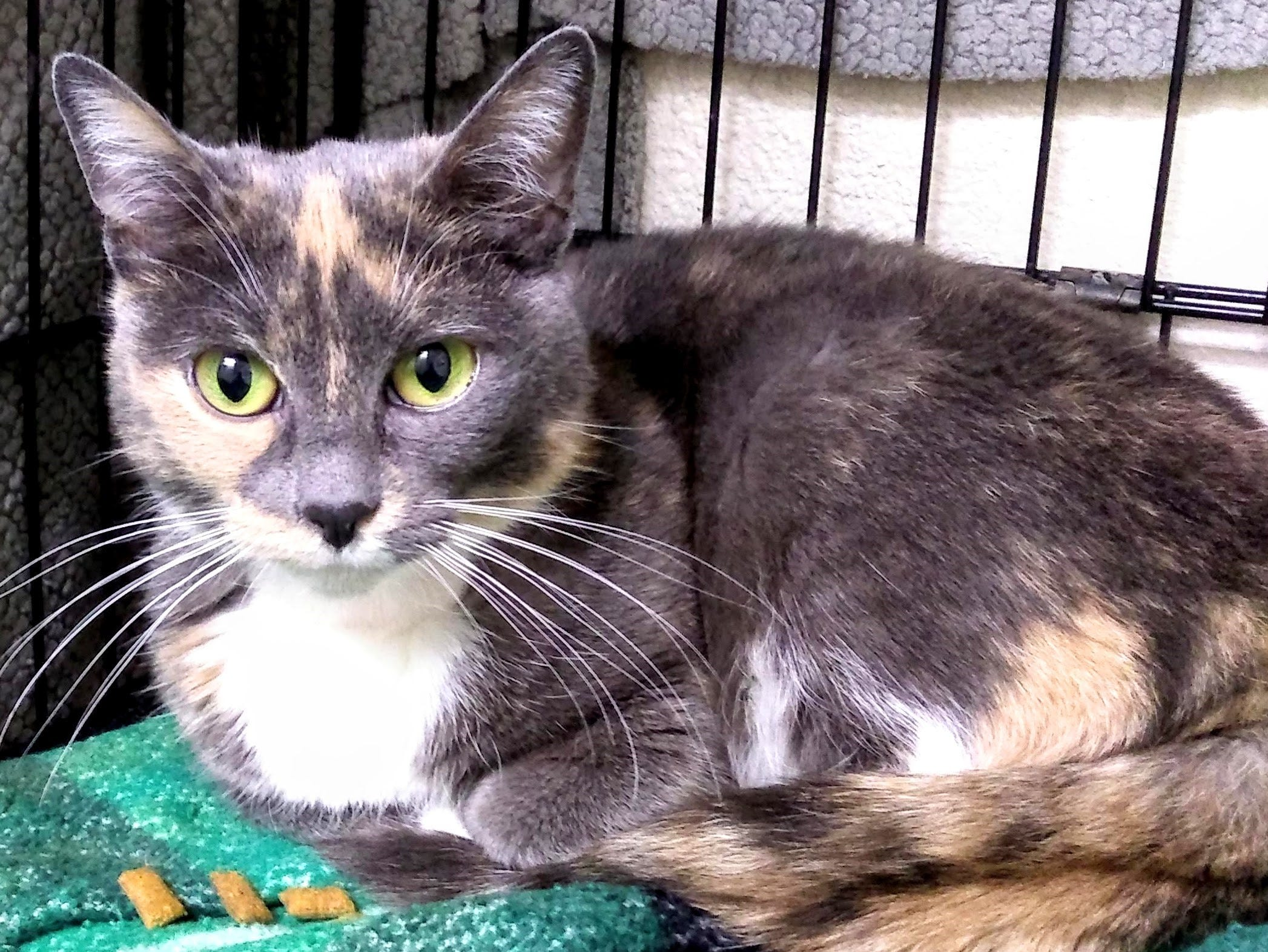 Amber is 7 years old. She is very sweet and loving. Amber loves to play and wants to be the only pet in the house. No children and a quiet home are a must. For more information, visit www.sfof.org or call 503-362-5611.