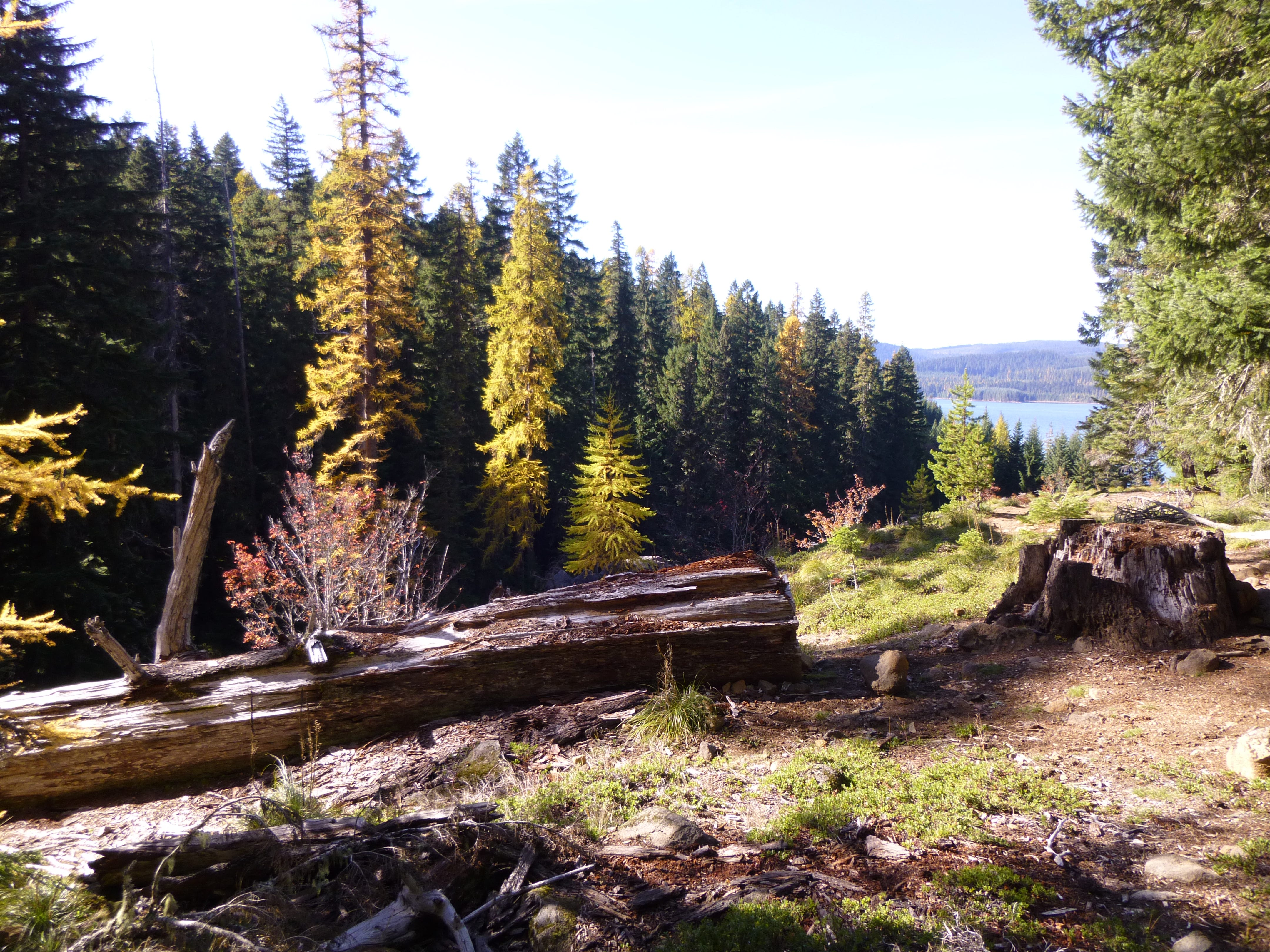 The Pacific Crest Trail follows Timothy Lake for 4 miles.