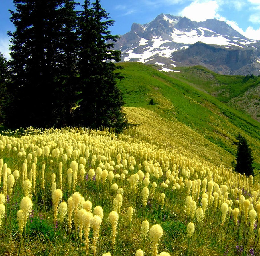 13 best hikes on Mount Hood feature waterfalls, old-growth forest and alpine views
