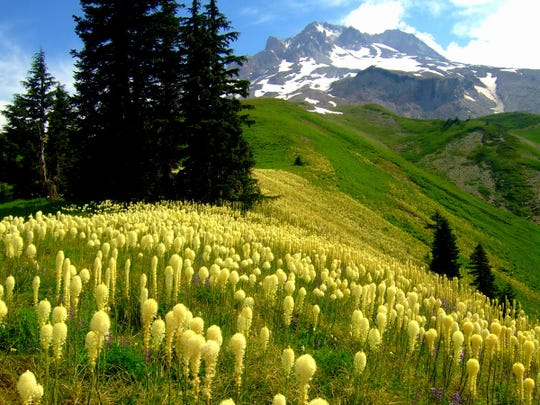 Paradise Park on Mount Hood offers unreal wildflower and mountain views.
