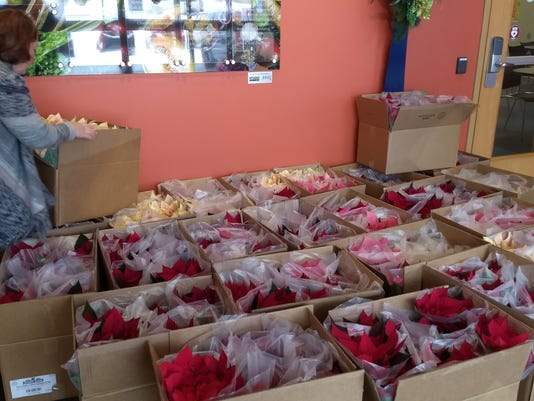 All The Boxes Of Poinsettias