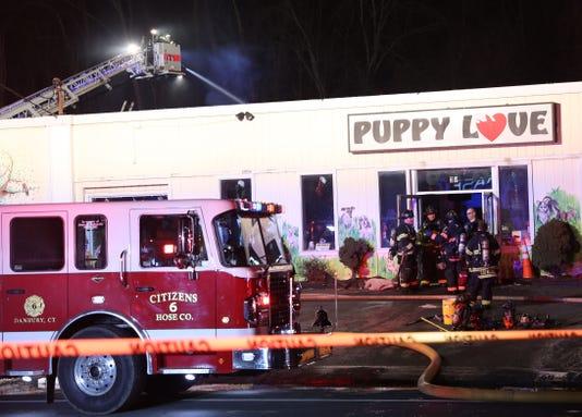 Puppy Love Fire
