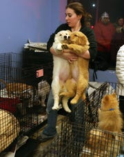 Lauren Bellarosa carries two puppies that were rescued from the fire at Puppy Love to an empty crate in a nearby storefront Jan. 3, 2019. Danbury firefighters extinguished the two-alarm fire that broke out in the rear of the building.