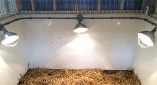If a heat lamp must be used, be sure the lamp is securely fixed and placed high enough that the lamp cannot be knocked down into the bedding.