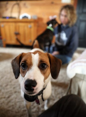 Sweetie greets a visitor while owner Kristi Scheffler plays with Spice behind her. Scheffler is a foster parent for dogs from the Muskingum County Adoption Center.