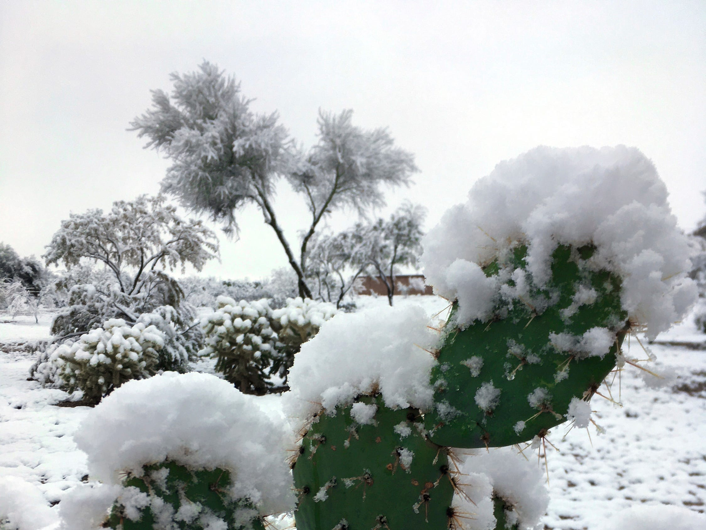 Snow partially covers a cactus outside of Tucson near Vail, Ariz., Jan. 2, 2019.