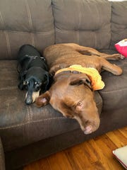 Jersey (left) and Hank cuddle on the Cote family's couch.