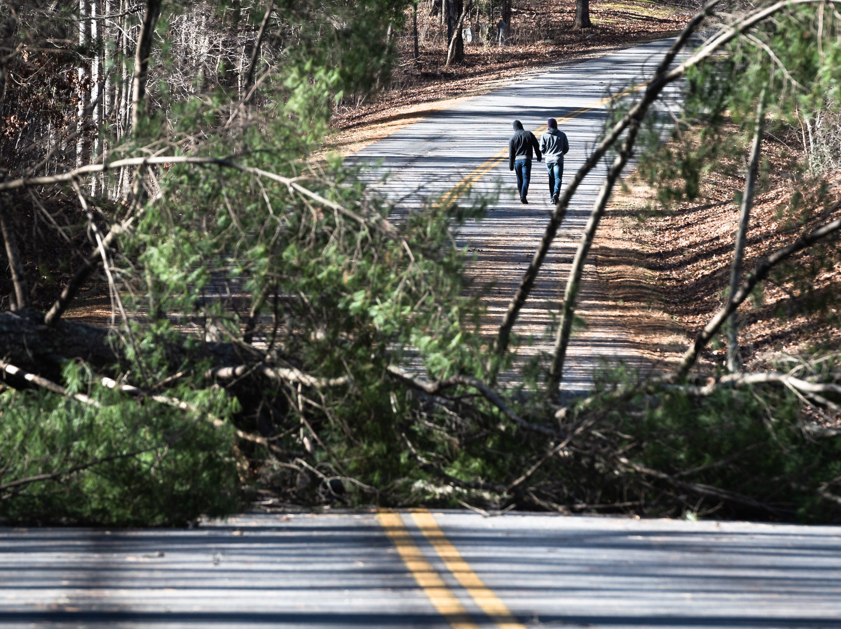 A couple visitors to the Blue Ridge Parkway walk past a fallen tree just north of the Folk Art Center Jan. 5, 2019. Much of the Parkway has been closed due to the government shut down and maintenance such as clearing debris is not possible.