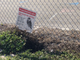 A burrowing owl nest, empty at the time, is marked by a sign at Cape Coral High School. At least three owls were living at the school's athletics areas in fall 2018.